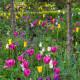 Victorian-Parterre-in-Spring-GWBH071-nicola-stocken.jpg thumbnail