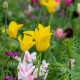 Victorian-Parterre-in-Spring-GWBH082-nicola-stocken.jpg thumbnail