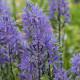Victorian-Parterre-in-Spring-GWBH095-nicola-stocken.jpg thumbnail